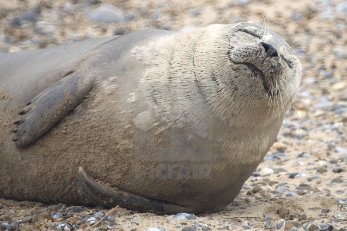 """Happy Seal"" stock image"